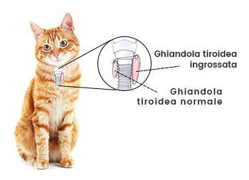 Che cos'è la tiroide?