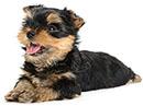 Ogni quanto si deve effettuare la toelettatura dei cani?