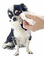 Pulire gli occhi e le orecchie dei cani