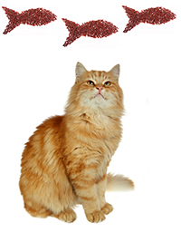 Come prevenire i disturbi cutanei del gatto
