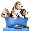 Cos'è la toelettatura per cani?