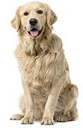 Prevenire l'ansia canina