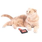 Toelettatura gatti domestici