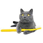 Igiene orale del gatto