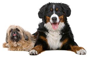 Come prevenire i disturbi della pelle del cane