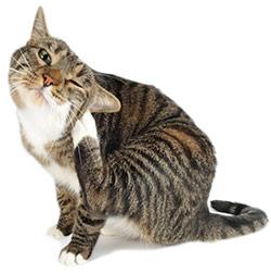 Come identificare le allergie nei gatti