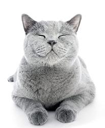 Come ridurre le allergie dei gatti