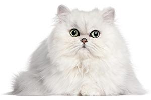 Come curare pelle e pelo del gatto