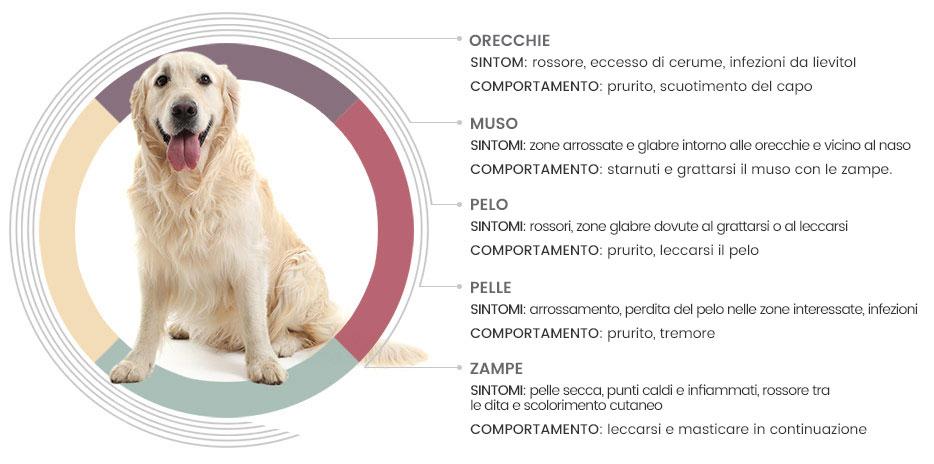 I sintomi dell'allergia dei cani
