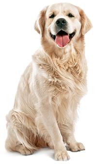 Come prendersi cura della pelle e del pelo del cane