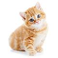 Toelettatura gattini