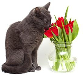 Allergie alimentari nei gatti