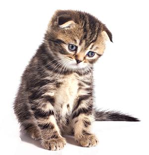 Sintomi di ansia nel gatto