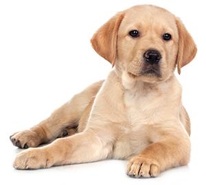Integratori per fegato, reni e pancreas dei cani