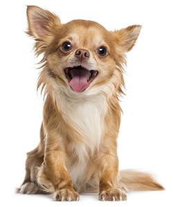 Quali sono le vitamine dei cani?