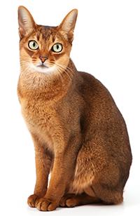 Quali sono le funzioni dei reni dei gatti?