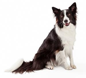 Integratori multivitaminici per cani