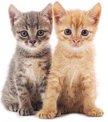 Misure preventive per la salute del cervello del gatto