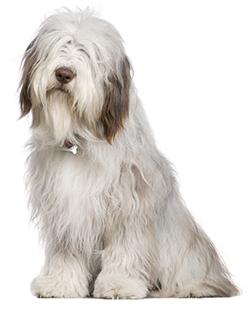 Rimedi casalinghi per contrastare l pulci nei cani