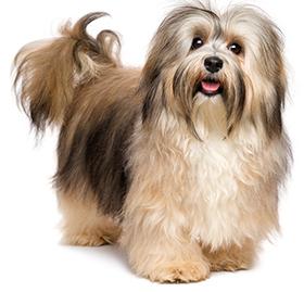 Quali sono i problemi della pelle del cane?