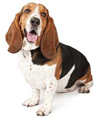 Il tartaro sui denti dei cani