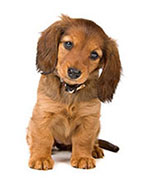Rinforzare le difese immunitarie dei cani