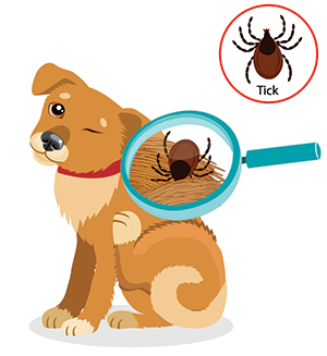 I sintomi di un cane con le pulci