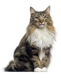Integratori per il sistema immunitario dei gatti