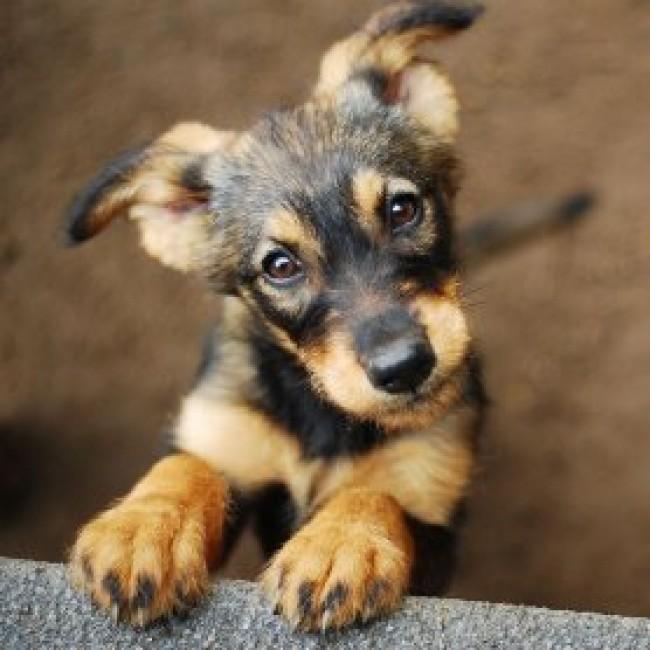 Ansia da separazioni nei Cani