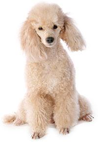 Cosa fare in caso di stipsi dei cani?