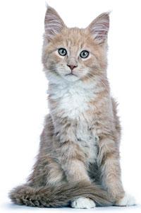 Quali sono i disturbi cutanei dei gatti?
