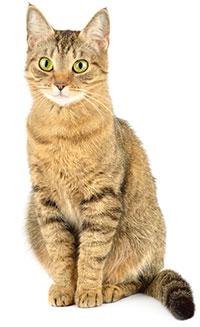 Cos'è l'ansia da separazione nei gatti?