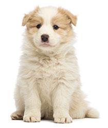 Cosa fare in caso di diarrea dei cani?