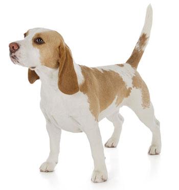 Sintomi dei disturbi di digestione del cane