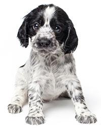 I sintomi della stitichezza dei cani