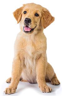 Integratori per la stipsi canina