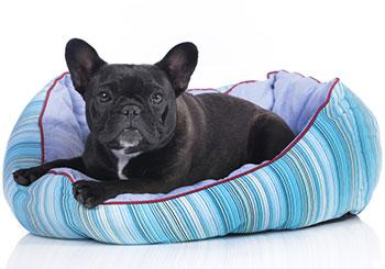 Come prevenire la tenia nei cani