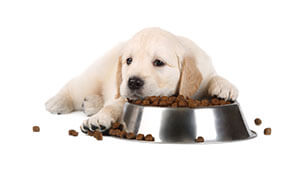 Allergie alimentari del cane