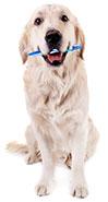 Come pulire i denti dei cani?