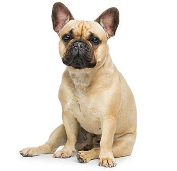 Cosa sono i vermi nei cani?