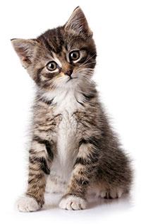 Sintomi e segni di ansia da separazione nei gatti