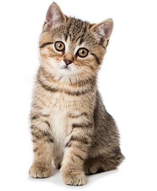 Come favorire una corretta digestione nel gatto