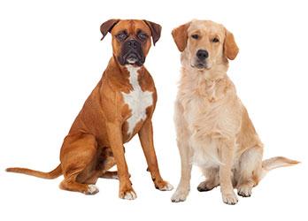 Quali sono i sintomi più comuni della diarrea dei cani?