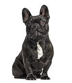 Perché bisogna pulire le orecchie del cane?